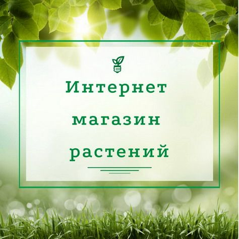 Профессиональный питомник декоративных растений Флорэкс Украина