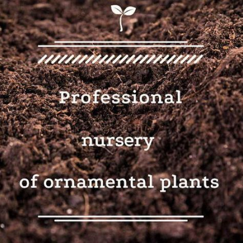 Professional nursery of decorative plants Florex Ukraine